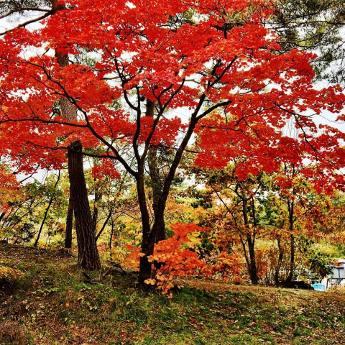 In gesprek met Nicki Yoshihara van Tokiotours herft in Hakodate