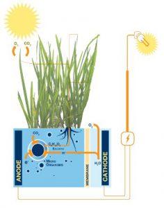 Hoe plant-e werkt, schematisch tekening, Marjolein Helder