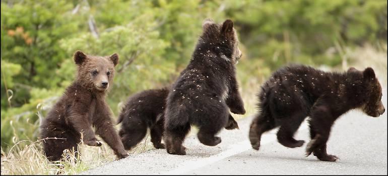 Corinne Hamoen de beren p de weg om je website te schrijven
