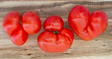 Gekke tomaten foto van Annette Behrens resized 415x230
